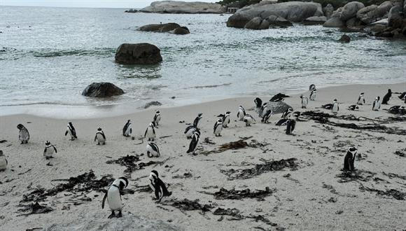 The Boulders section of Table Mountain National Park consists of three pristine ...